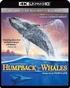 Humpback Whales 4K + 3D (Blu-ray)