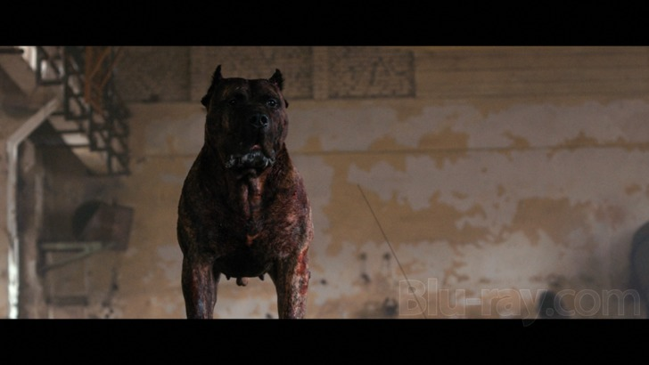 bullet head dog