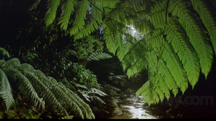 Tropical Rainforest Blu-ray